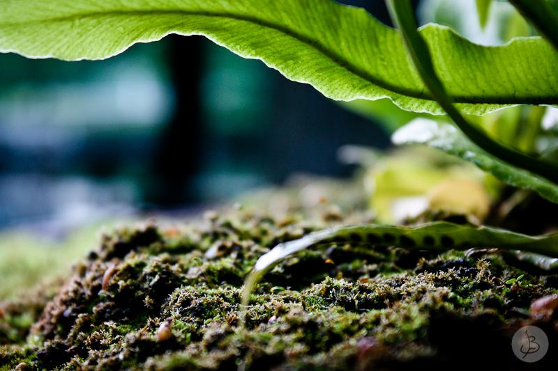 This is a photograph of the 'Bois de Vincennes' article!